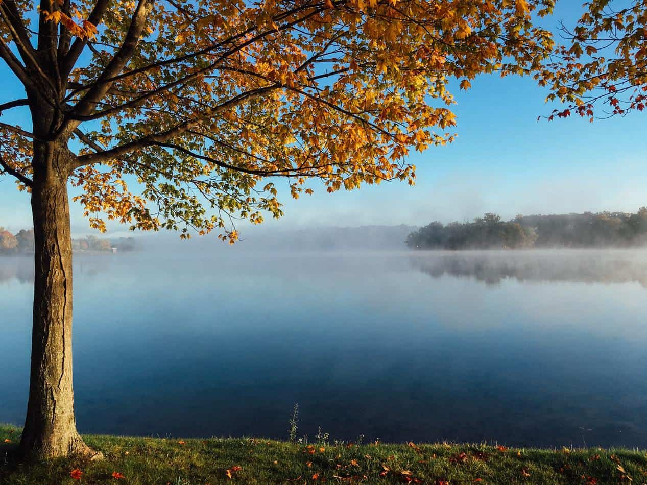 Autumn-kissed tree overlooking a misty Ontario lake in cottage country.